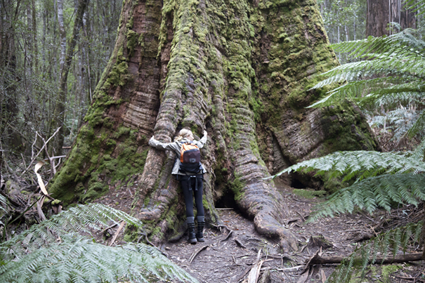 Captain Jayneway getting a hug off the biggest tree in the world..