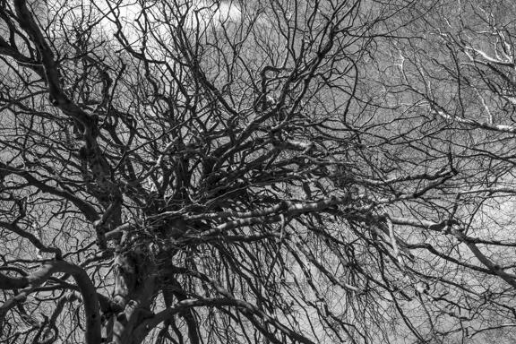 OLD TREE-1655