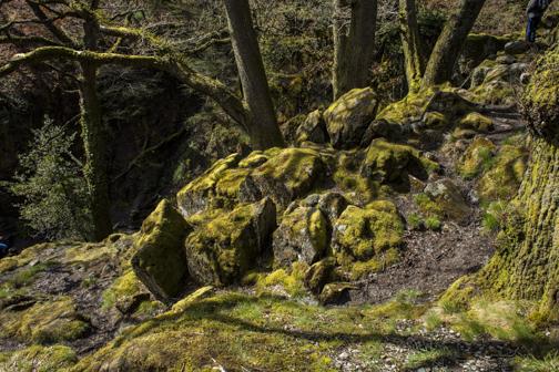web dry stone wall-2101