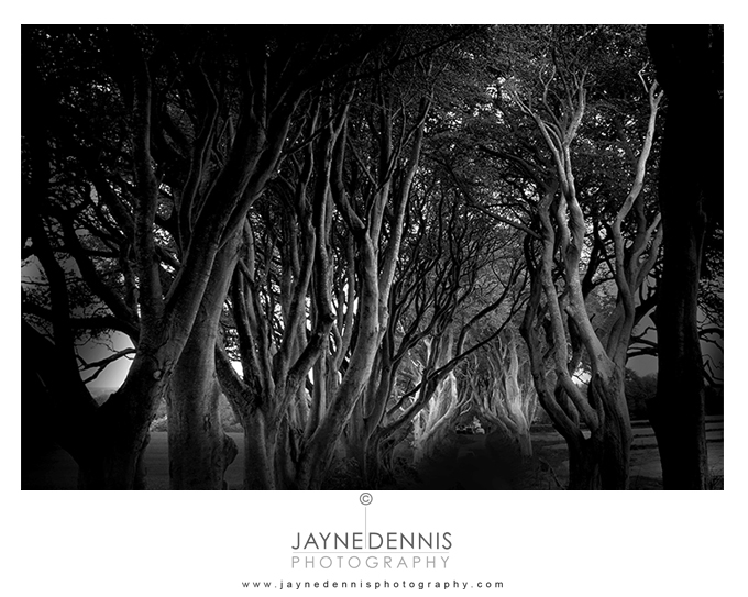 dark hedges-2438 web